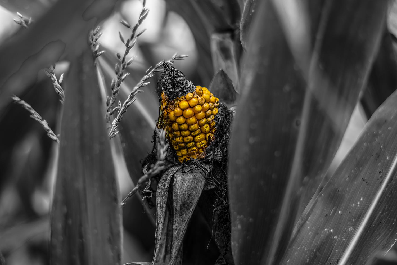 vergessene Frucht