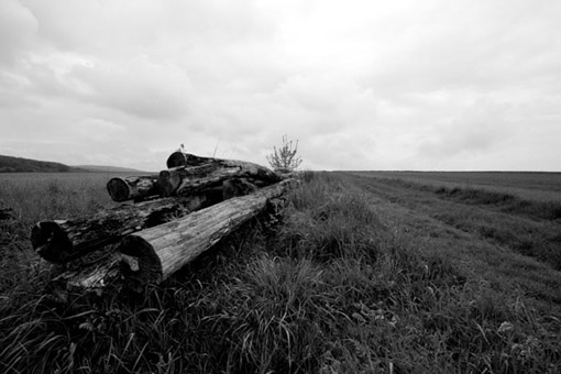 Vergessene Holzstämme