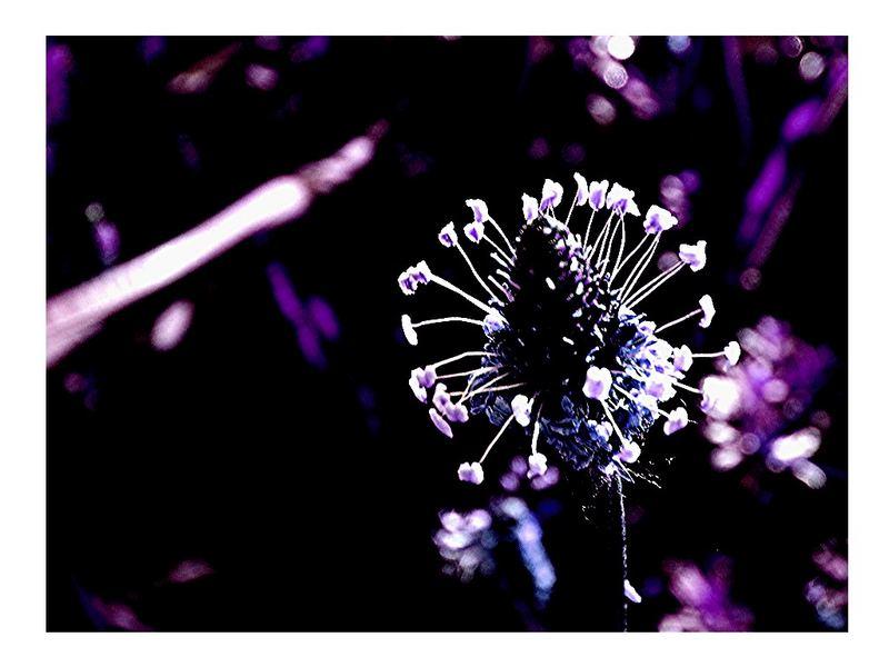 vergessener Blütenstand