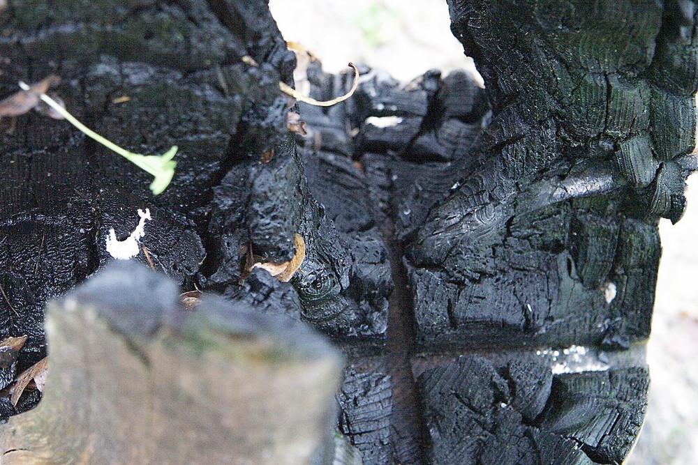 verkohlter Holzscheit