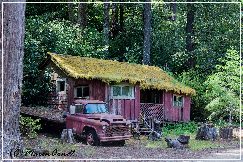 Verlassen im Redwoodwald