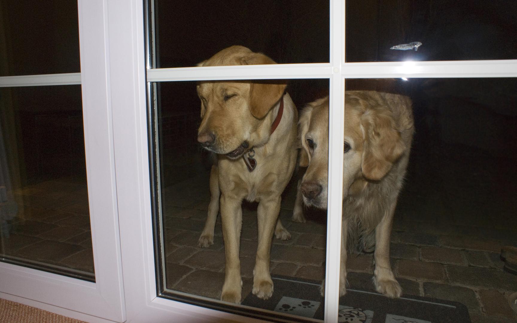 verlassene Hunde