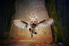 ... verleiht Flügel