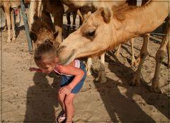 verliebtes Kamel