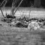 ...verlorener Fußball