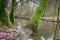 Vermoost im Wald