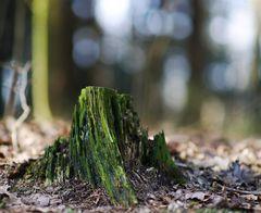 vermooster Baumstumpf