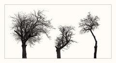vernachlässigte Obstbäume
