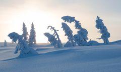 Verneigung vor dem Winter