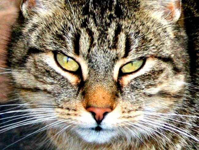 Verr ckte katze zu verschenken foto bild tiere - Bilder verschenken ...