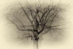 Verrückter Baum