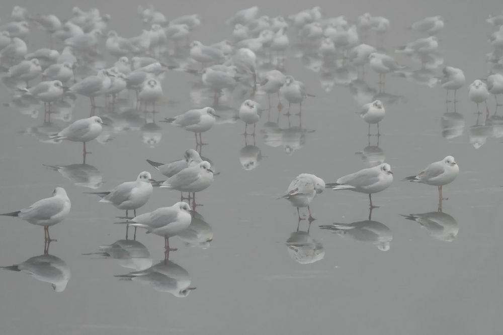 Versammlung auf Eis