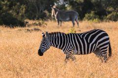 Verschiedenartige Zebrastreifen :-)