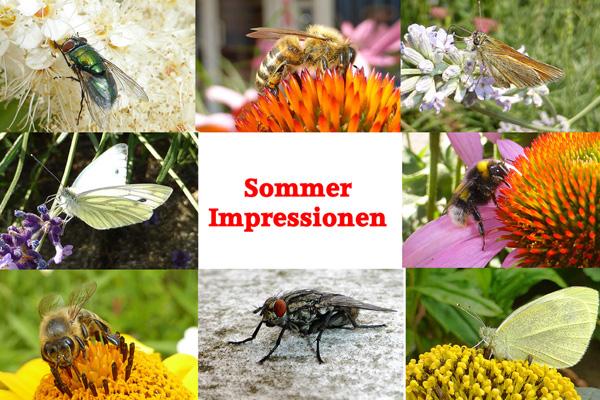 Verschiedene Insekten