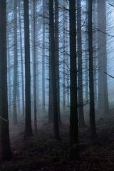 Verschleierter Wald