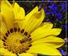 Verschnaufpause im Gelben