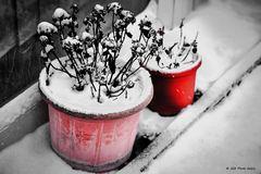 Verschneite Kleinpflanzen im Winter