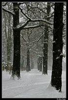 Verschneite Wege ..