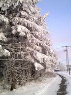 verschneiter Märchenwald im Dreiländereck [2009|01|10]