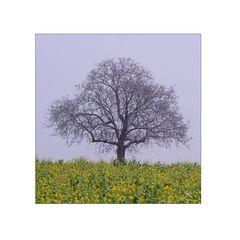 Verschneiter Obstbaum ..