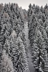 Verschneiter Wald mit Schneise!