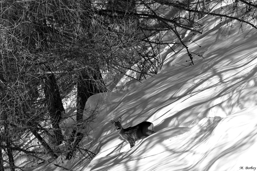 Verso il bosco.
