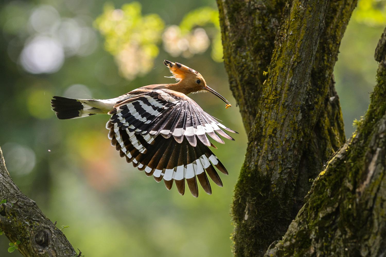 Verso il nido