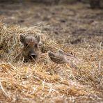 Versteckspielen macht tierischen Spaß