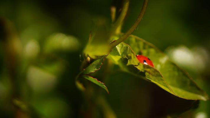 Käfer Arten Fotos Bilder Auf Fotocommunity
