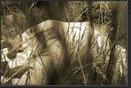 Versteckt im Gras ...