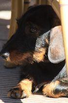 versteckt unter einem Stuhl