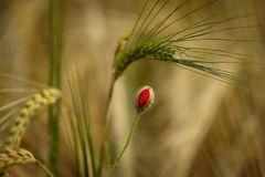 Versteckte Blüten II