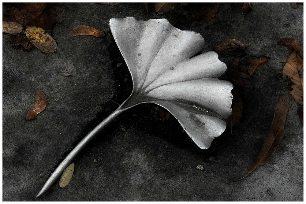 Versteinerte Natur (2)