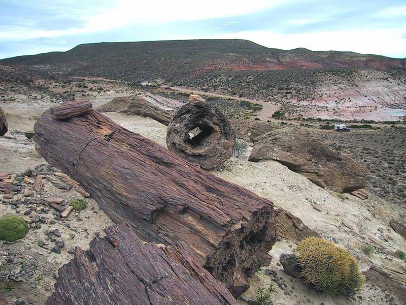 Versteinerter Wald in der Steppe von Chubut,Argentinien