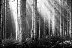 ~ verstrahlter Wald ~