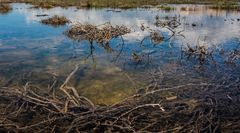 verstrickt im braunen Sumpf