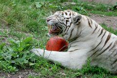 Versucht ja nicht mir den Ball weg zu nehmen