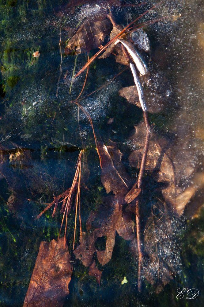 Versunkene Herbstblätter