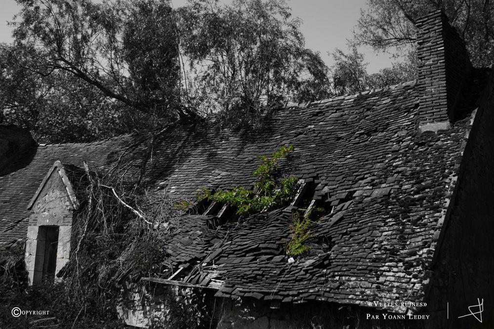 """""""Vertes ruines"""""""