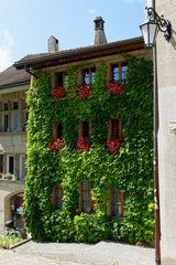 Vertikale Begrünung in Fribourg