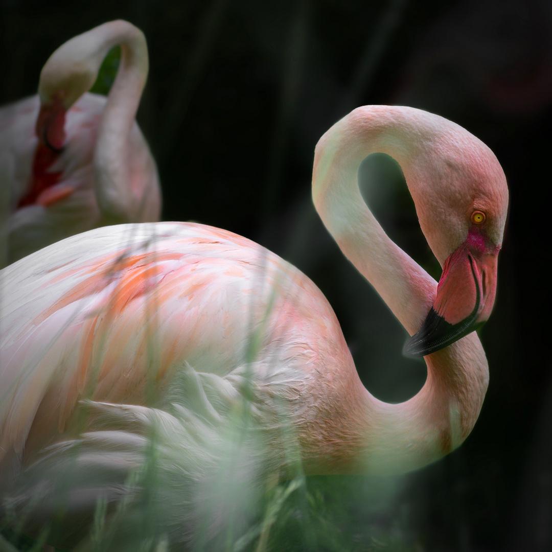 Verträumter Flamingo