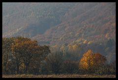 Verträumter Herbst am Kandel...