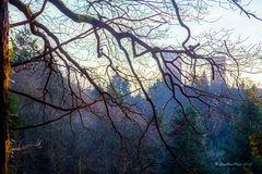 Verträumter Winterwald ohne Schnee