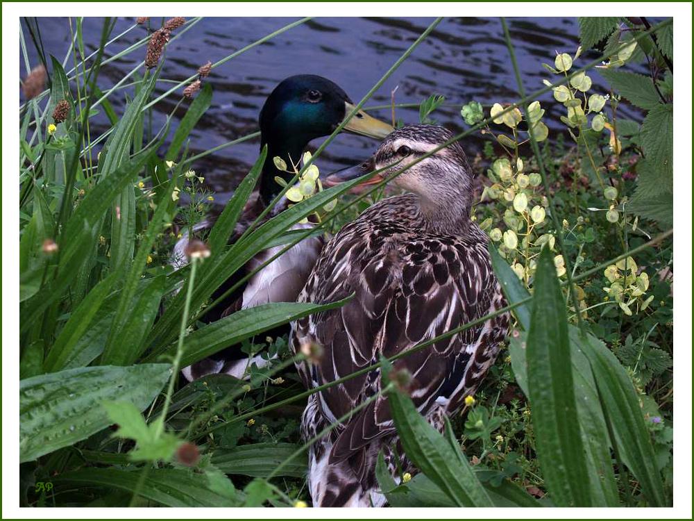 Vertragen Wir Uns Wieder Foto Bild Tiere Wildlife Wildlife