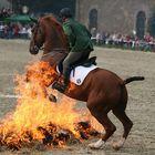 Vertrauen des Pferdes zum Reiter