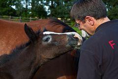 vertraute Begrüßung zwischen Ortwin Schneider und einem jungen Fohlen