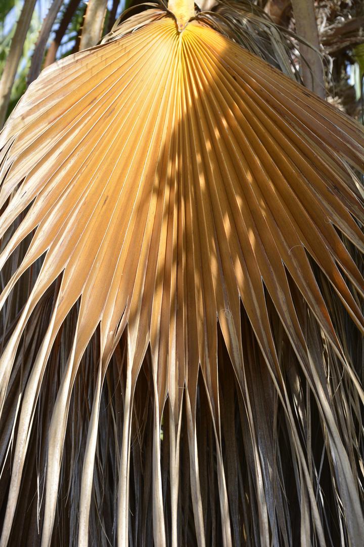 Vertrocknetes Palmenblatt