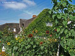Verwachsenes Reethaus mit Sonnenblumen auf der Insel Amrum