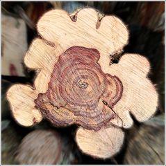 Verwandlung von Holz