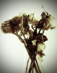 Verwelkte Blumen